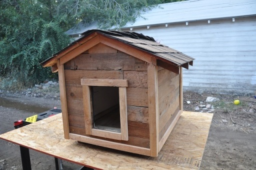 Rusty's dog house