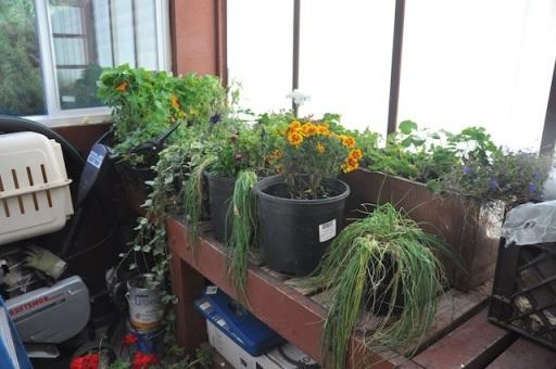 non-water-plants.jpg
