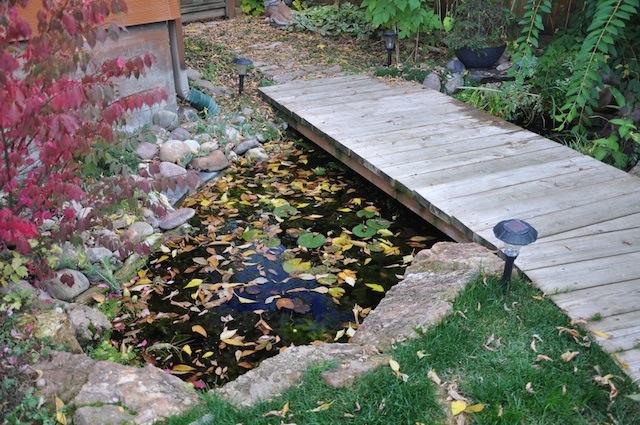 pond-this-fall-oct2011.jpg