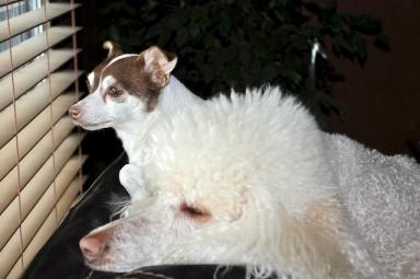 Not Innocent Dogs