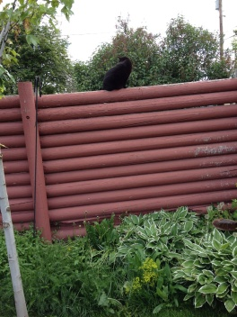 the old fence with Pippin perched on top