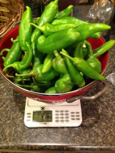One of our pepper harvests weighing in at about 3 pounds
